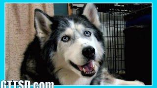 OAKLEY EMERGENCY VET VISIT Bloated Dog