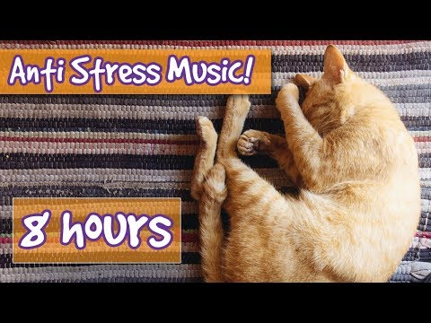 Relax Your Cat! Calm Stressed or Anxious Cats with Relaxing Music Made to Reduce Stress, Help Sleep!