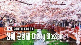 진해 벚꽃 축제 2019 (진해군항제) 영상 스케치│C…