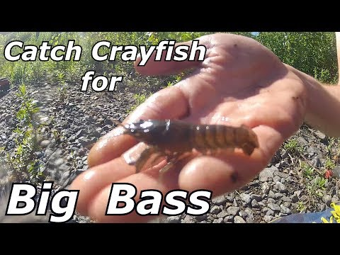 How To Catch Crayfish WITHOUT A TRAP - Easy Bass Bait + Underwater