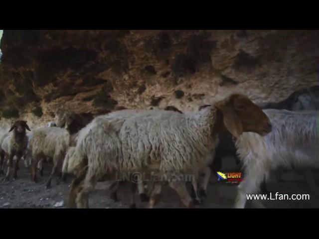 75- مغارة حقل الرعاة في بيت ساحور