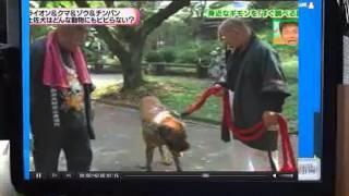 Repeat youtube video 土佐犬vsライオン