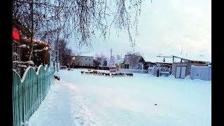 Жителей Вилюйска терроризирует большая стая собак, пострадавших пока нет