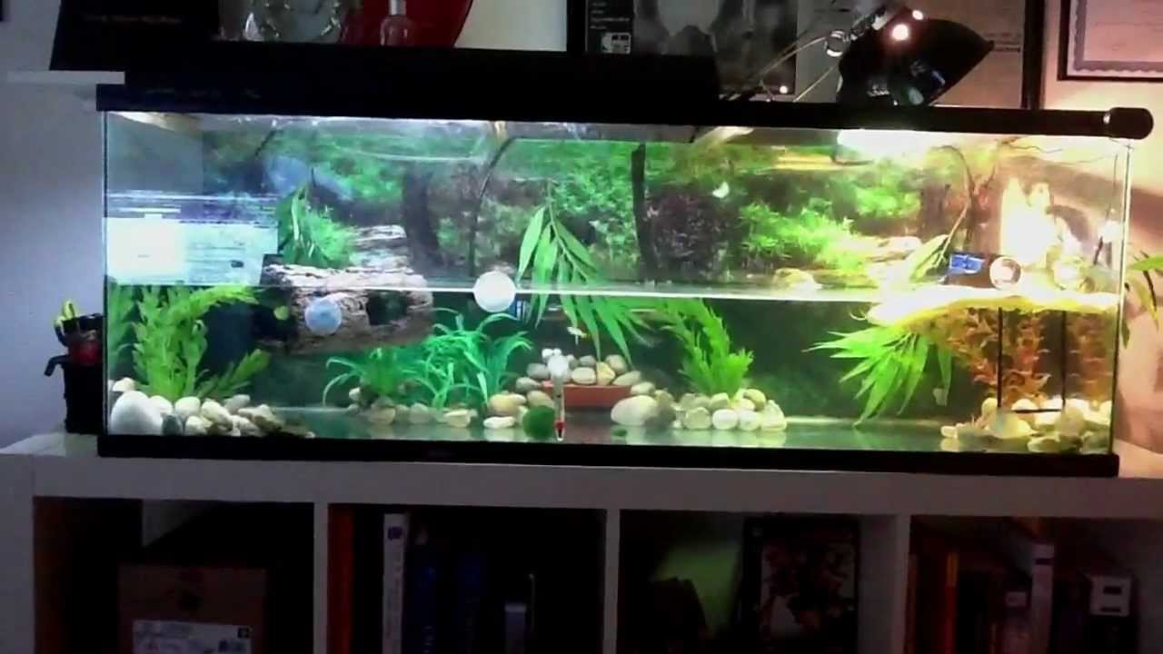 Red eared slider and fish tank YouTube
