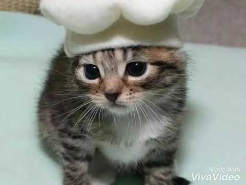 Images of cute kittens/ cats lover