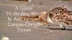 Introduction to Birding Corpus Christi