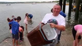 Mackerel Breaking In Youghal Harbour