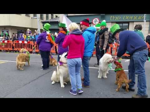 dungarvan st patricks day parade 2017