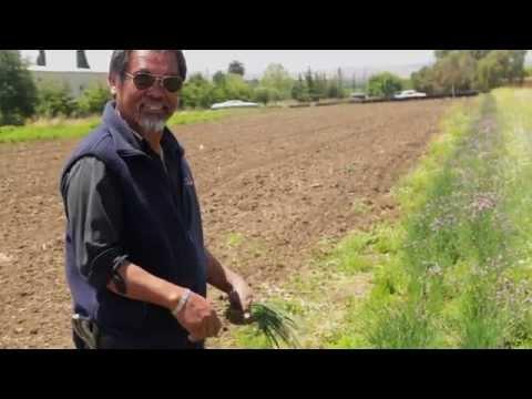 California Organics Business Media Outline