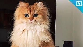Милые котики и кошечки
