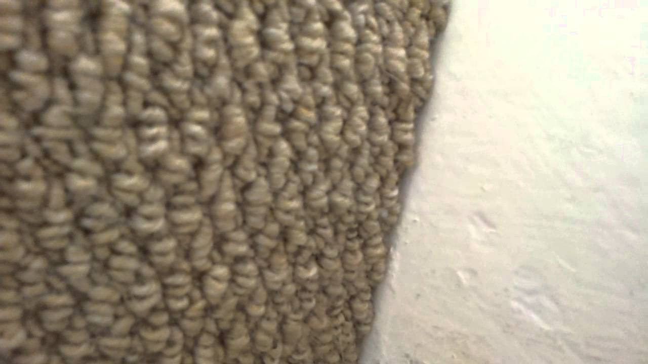 moth carpet  Floor Matttroy