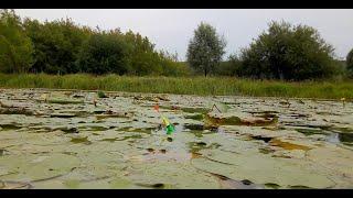Выкладывает поплавок в кувшинках КАРАСЬ ЛИНЬ Рыбалка на утренней зорьке