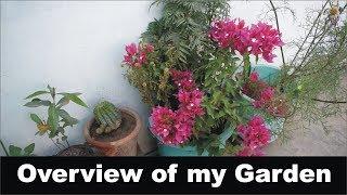 Overview Of My Garden 2018 🔵 Nukta Guidanc