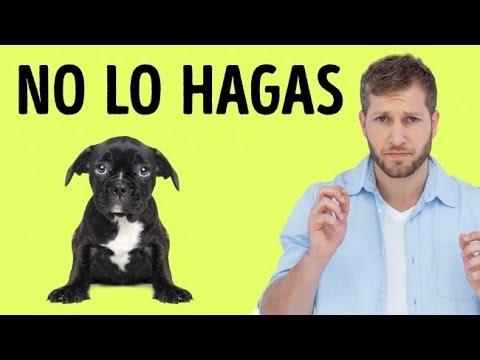 12 Cosas que tu perro odia de ti