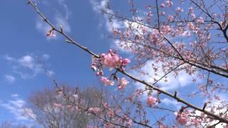 天王森泉公園・泉館(いずみのやかた)で開催中の「吊るし雛アート」を収...