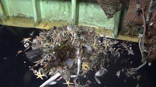 身近な海 増え続けるごみ 海底に家電 漁に支障