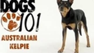 Popular Australian Kelpie & Dog videos
