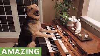 These Dogs are Absolute Geniuses | Compilation