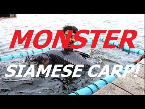 MONSTER Siamese Carp! New Bungsamran - JKT Fishing Guide Special Episode