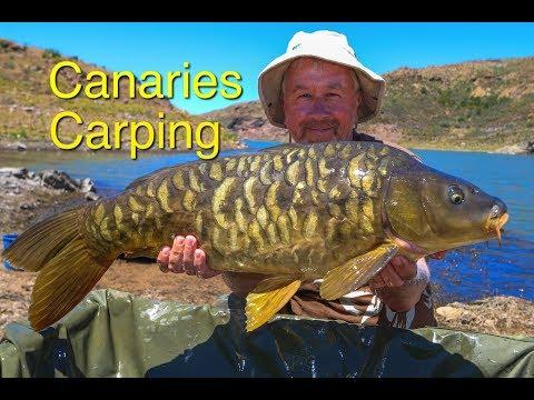 Canaries Carping