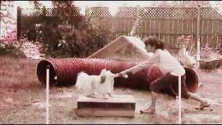 "Dog R Cise 2 Shih Tzu Tricks Fitness Dog Aerobics- Crazy Dog Tricks ""this Beat Is"""