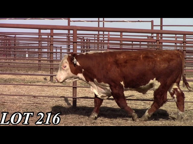 Mead Angus Farms Lot 216