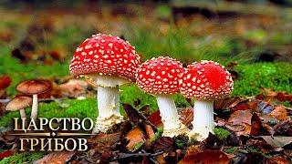 Мухоморы Царство грибов Моя Планета