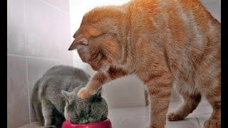 \Спорим засмеешься!\Смешные фотки котов))\