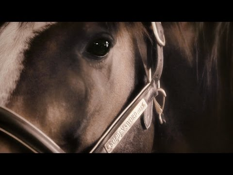 SUMMERHILL SIRES FILM 2014 / 2015
