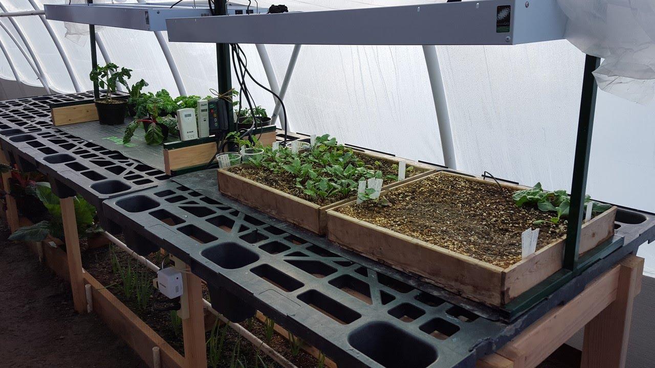 $27 Greenhouse Seedling Table Design & Tomato Plant Sale on raised bed aquaponics, raised bed plans, raised bed greenhouse growing, raised bed kits,