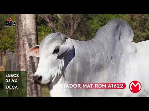 Lote 1005 Mega Touros Matinha