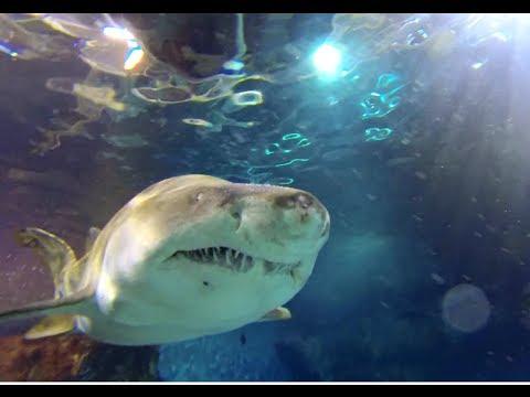 Diving with Sharks @ L'Aquarium de Barcelona
