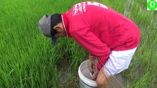 Catch fish in the field