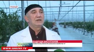 Владимир Путин поблагодарил Рамзана Кадырова и весь чеченский народ за восстановленный Грозный