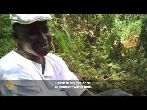Africa Investigates  Sierra Leone: Timber!