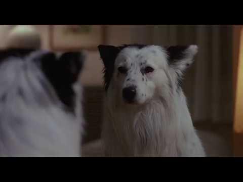 The Hidden (1987) Psycho Dog Mirror Scene