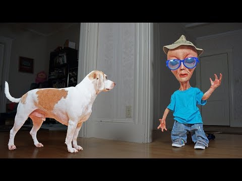 Dog vs Alien in Disguise Prank: Funny Dogs Maymo, Penny & Potpie