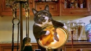 Best Funny cat and kitten - TOP Funny scared cat videos Compilation 2016