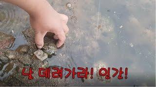 낚시하다 야생 거북이를 주워버렸습니다. 거북이의 운명은…
