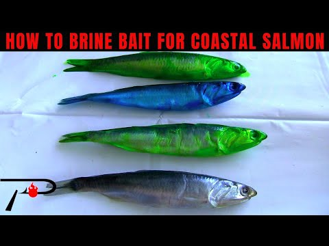 How To Brine Bait For Coastal Salmon