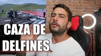 Imagen del video: CAZAN 1.500 DELFINES Y LOS ANIMALISTAS SE INDIGNAN