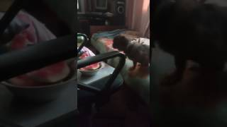 ШОК!!! собака плачет по арбузу