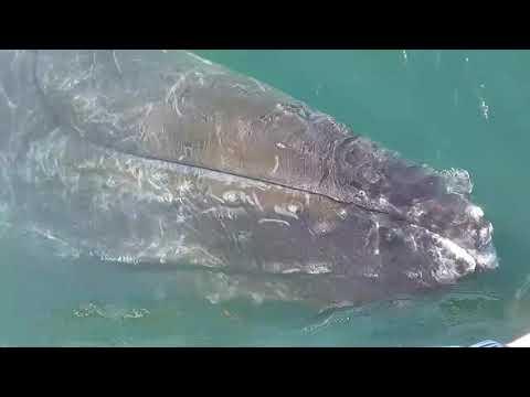 Eye to Eye with Humpback Whale Mariner Cruises Whale Watching Brier Island Nova Scotia