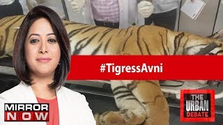 Is the Maharashtra Govt attempting to kill Tigress Avni's cubs? | The Urban Debate With Faye D'Souza