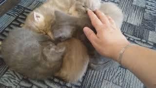 Самый милый котенок в мире, да не один! (Семейное видео - VivaVideo)