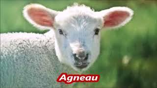 Apprendre le français : Les animaux épisode #01