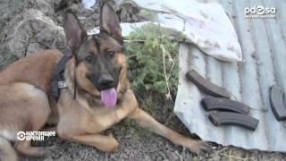 Лука - сабака-вэтэран з мэдалём Марыі Дзікін | Лука - собака-ветеран с медалью Марии Дикун