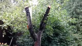 видео обрезка старой яблони