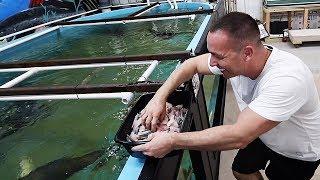 feeding-the-12-000-gallon-aquarium