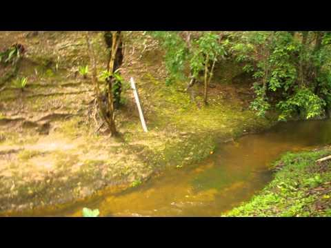 Wild monkey play water jumping at Taman Tasik Lama, Brunei